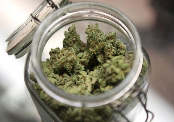 Cosecha-de-cannabis