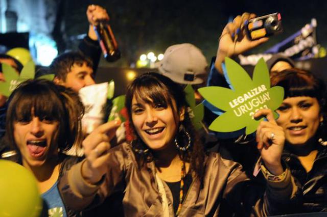 Ya son 54 los interesados en cultivar marihuana.