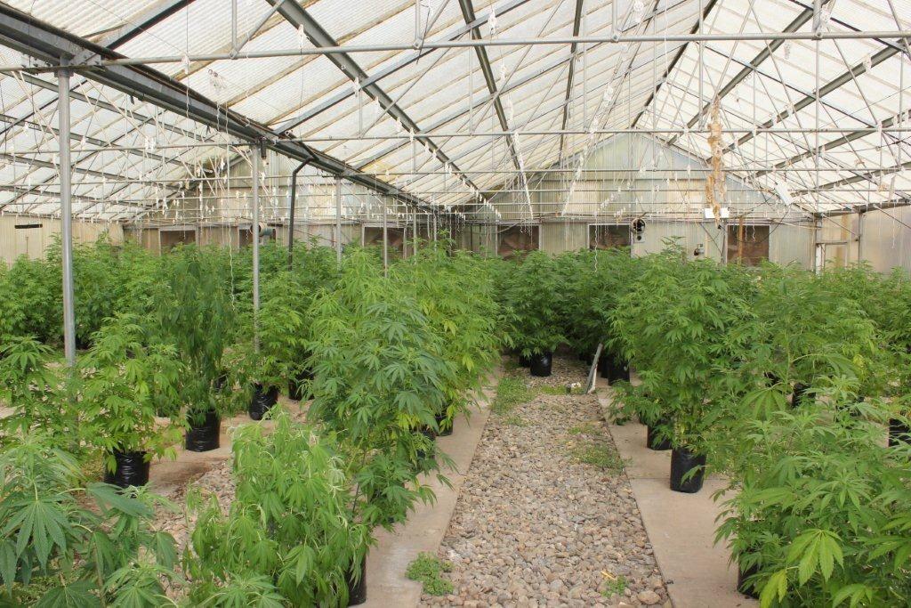 Cultivadores cuestionan precio fijado por el gobierno(1 Dolar)