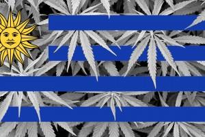 LEGAL-Cannabis-in-apotheek-Uruguay