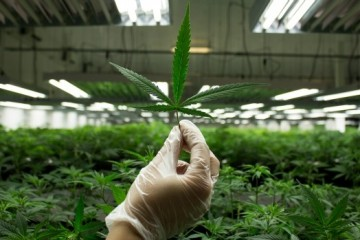 first-nations-medical-marijuana