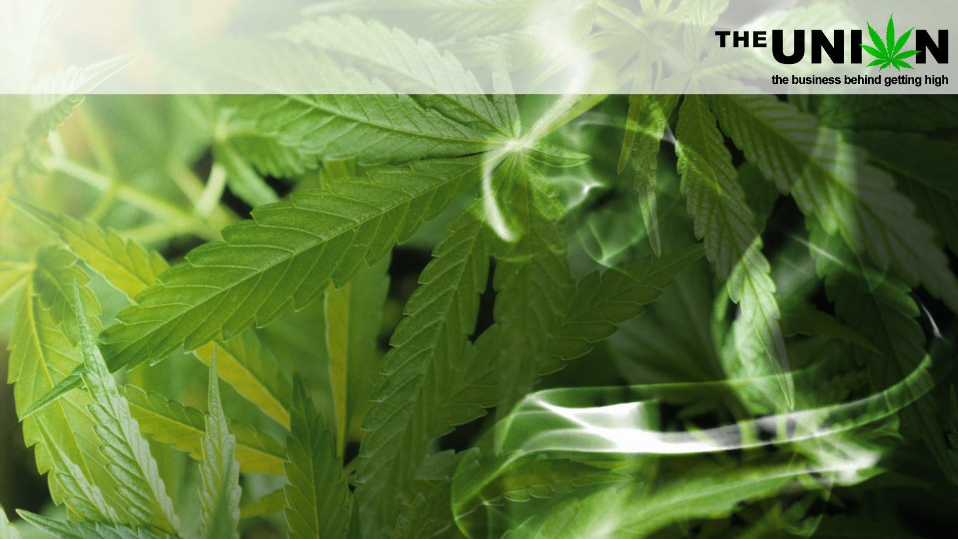 La historia de la Marihuana en The Union, un gran documental