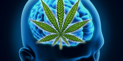 dt_150608_brain_marijuana_cannabis_800x600jpg