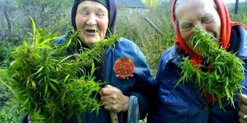 Srandovní a zajímavé obrázky  | www.zabavneobrazky.cz