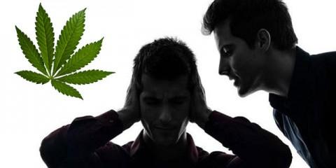Esquizofrenia-cannabis