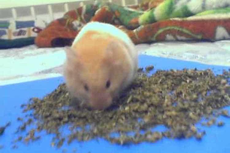 marijuana-affects-pets-rodents