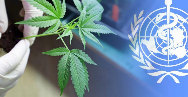 ONU critica a Uruguay por legalización de marihuana: subestima sus riesgos, dice