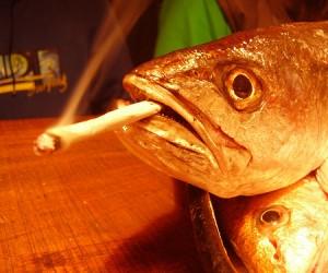 pescado fumando