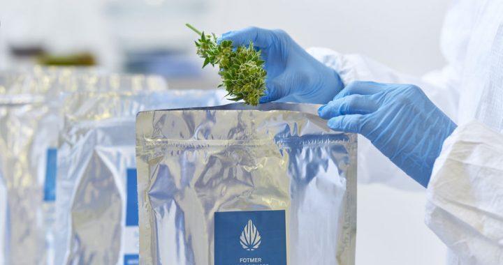 Empresa de cannabis medicinal podría paralizar su producción debido a demoras en permisos