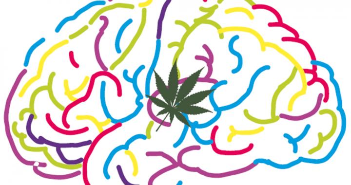 CannaLatan, la red de investigación iberoamericana en cannabinoides