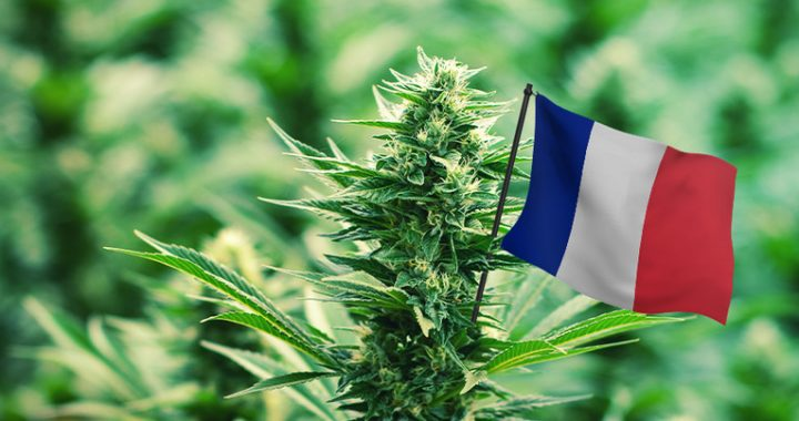 Francia distribuirá cannabis medicinal gratuito