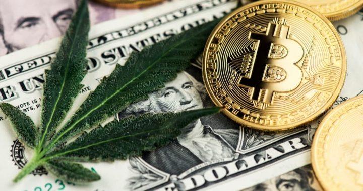 """La industria del cannabis se queja por estar """"en el banquillo de los acusados""""; ¿qué alternativas ve el gobierno?"""
